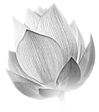 Lotus Images